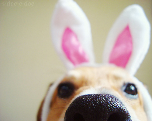 Happy Easter from the Dog